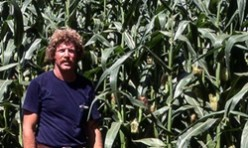 California 'Corn